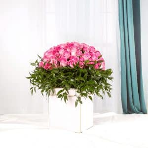 Buono Flower Box Pink
